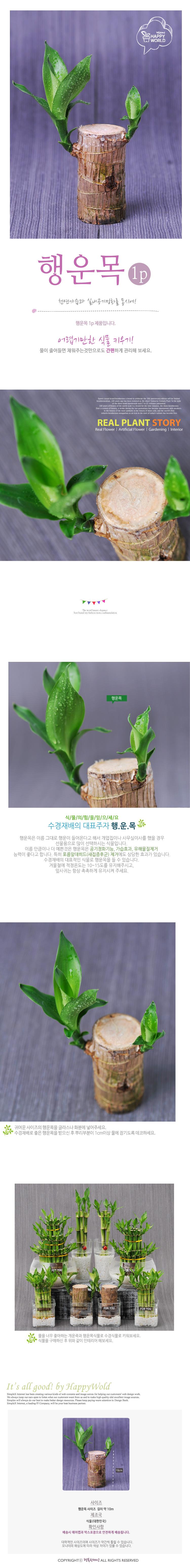 [행복한세상]행운목 - 지승, 3,000원, 허브/다육/선인장, 공기정화식물